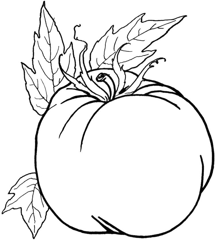 Tomato Preschool Coloring Pages Vegetables