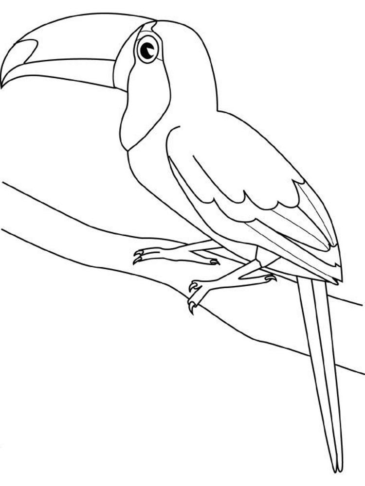 Toucan Bird Coloring Page For Kids