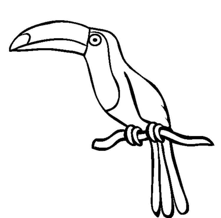 Toucan Bird Coloring Page