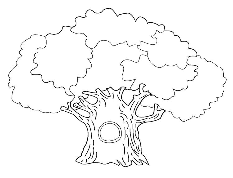 Tree Coloring Pages For Kids Printable