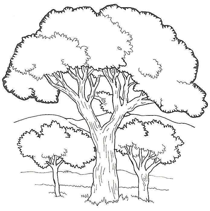 Tree Coloring Pages In Hills