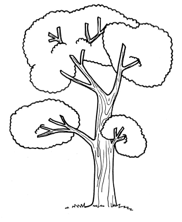 Tree Coloring Pages Printable Free
