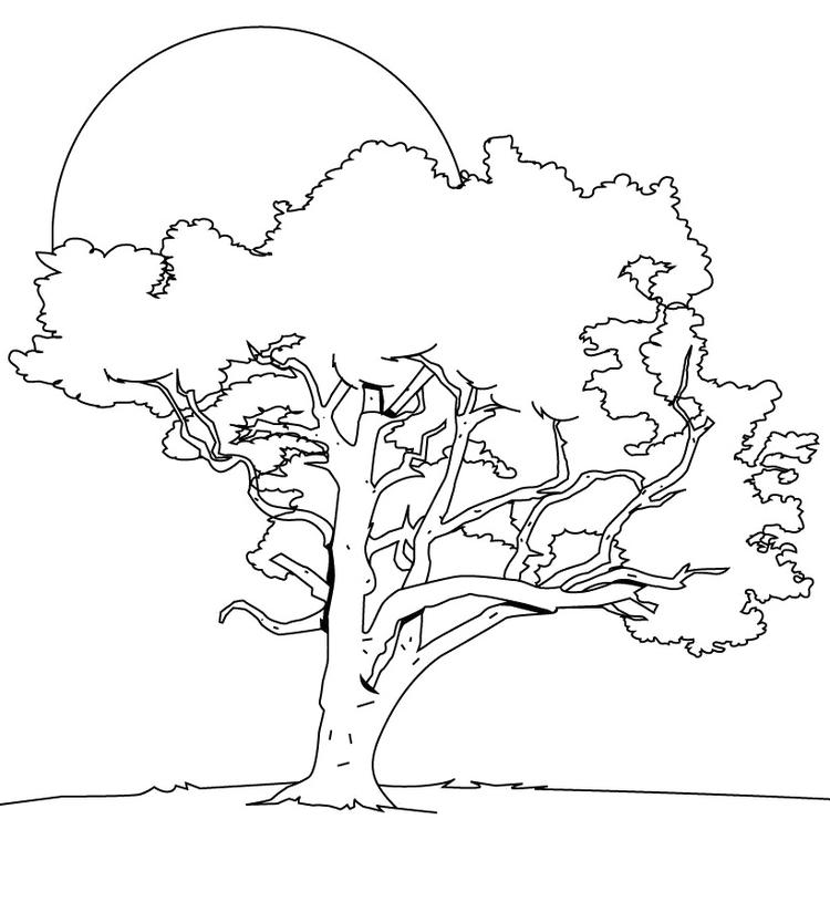 Tree Coloring Pages With Sun