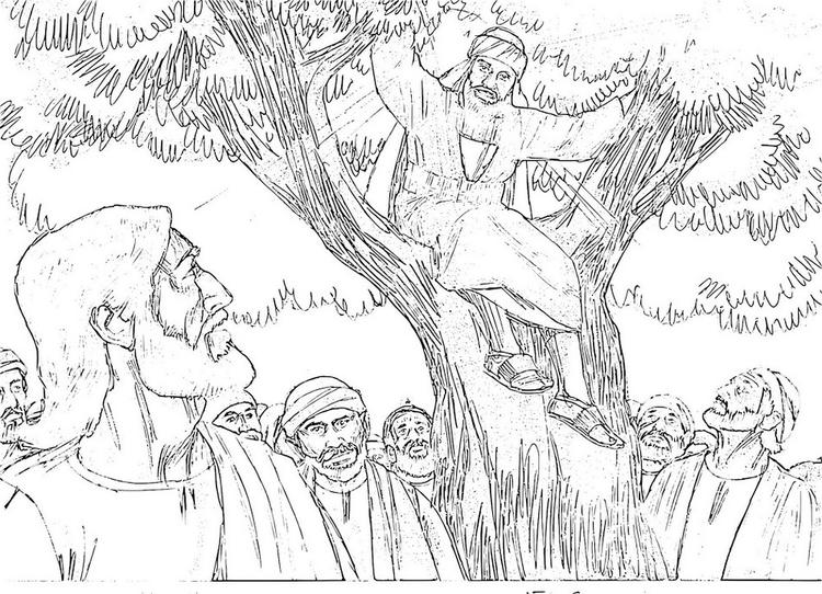 Tree Zacchaeus Coloring Picture Real