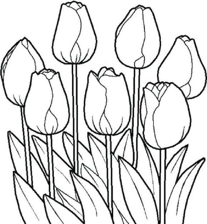 Tulip Flower Coloring Pages