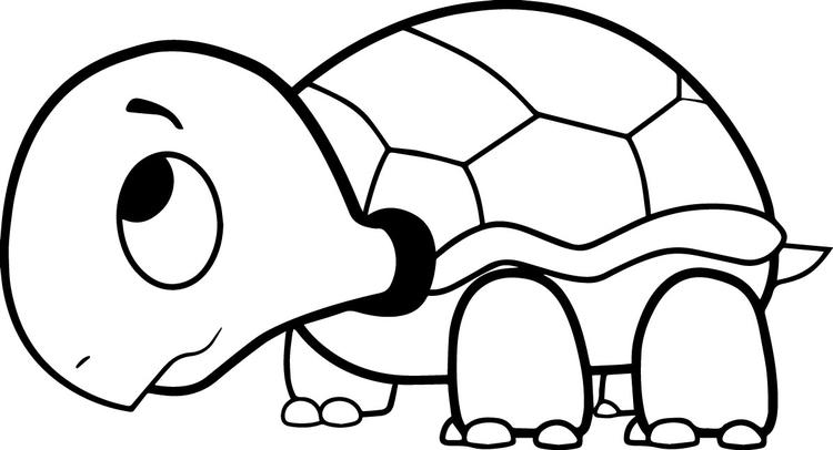 Turtle Coloring Pages For Kids Printable