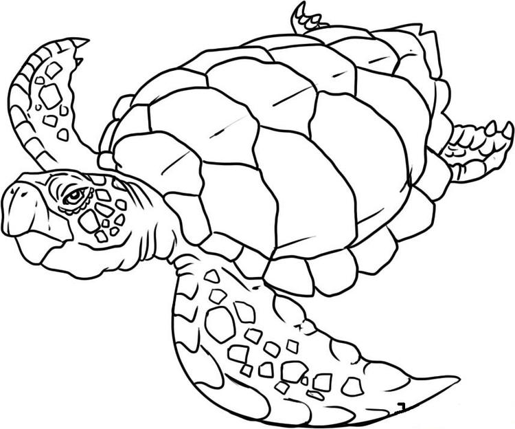 Turtle Coloring Pages Of Sea Animals