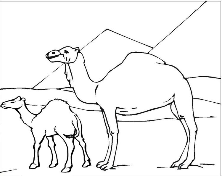 Two Camel Desert Pyramid Coloring Pages