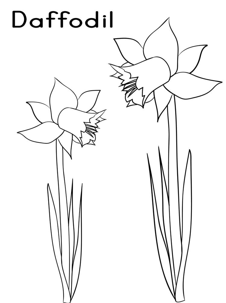 Two Daffodils Flower Coloring Page