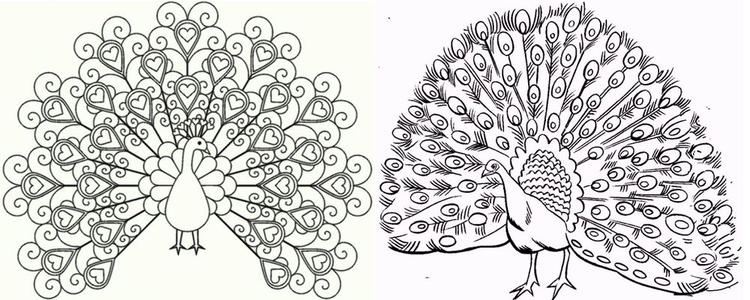 Two Peacock Meet Coloring Pages