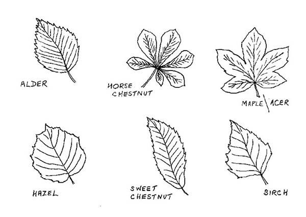 Type Of Falling Leaves Coloring Pages