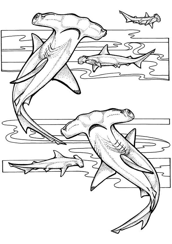 Under The Sea Coloring Pages Hammerhead Shark