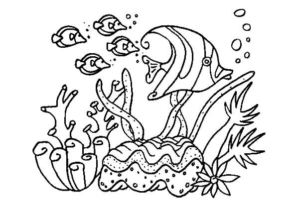 Under The Sea Life Coloring Pages
