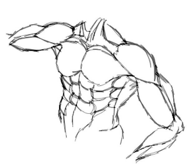 Upper Body Human Anatomy Coloring Pages