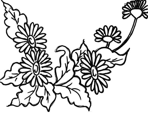 Valentine Day Aster Flower Coloring Pages