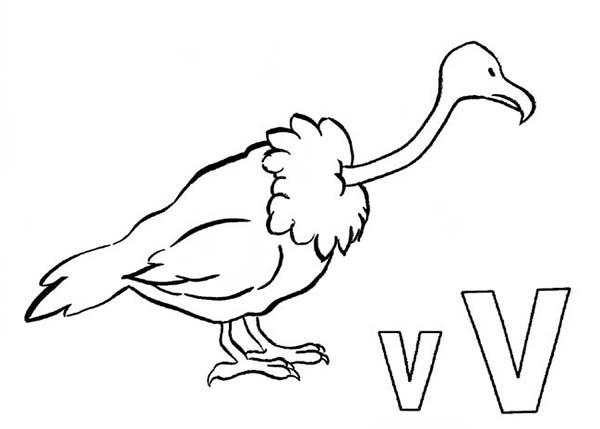 Vulture For Learning Letter V Coloring Page