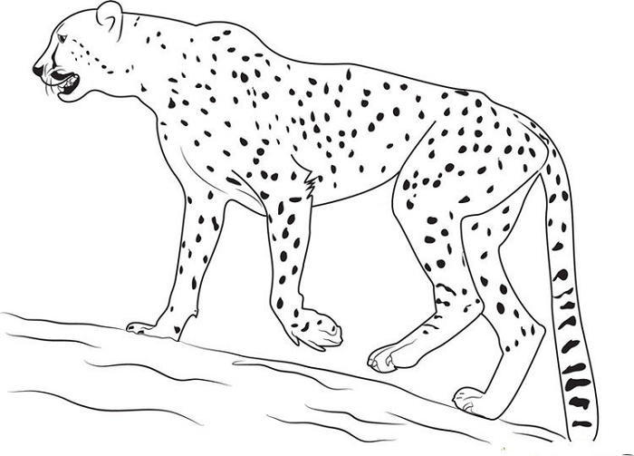Walking Cheetah Coloring Pages