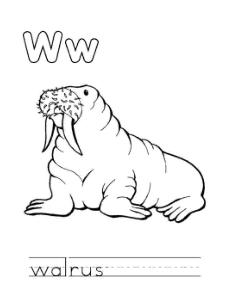 Walrus Animal Free Alphabet Coloring Pages