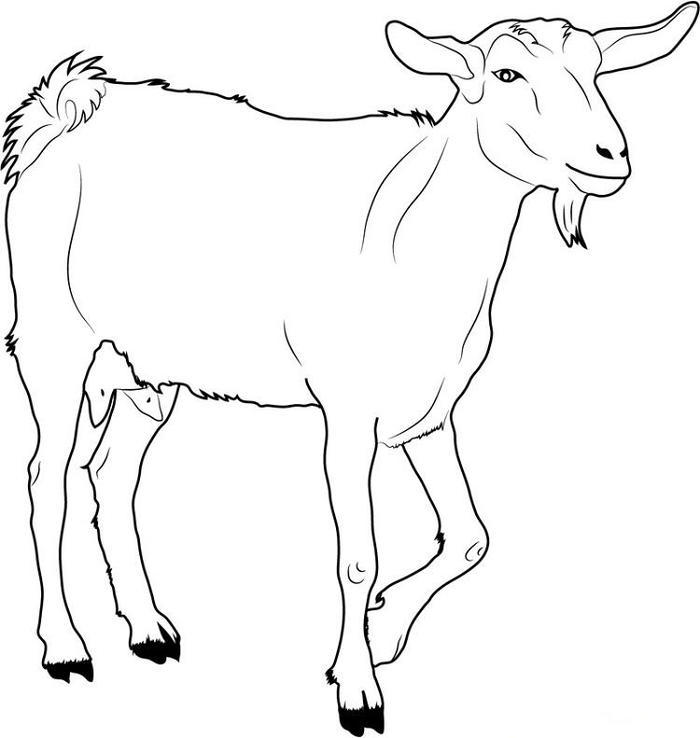 White Goat Coloring Pages