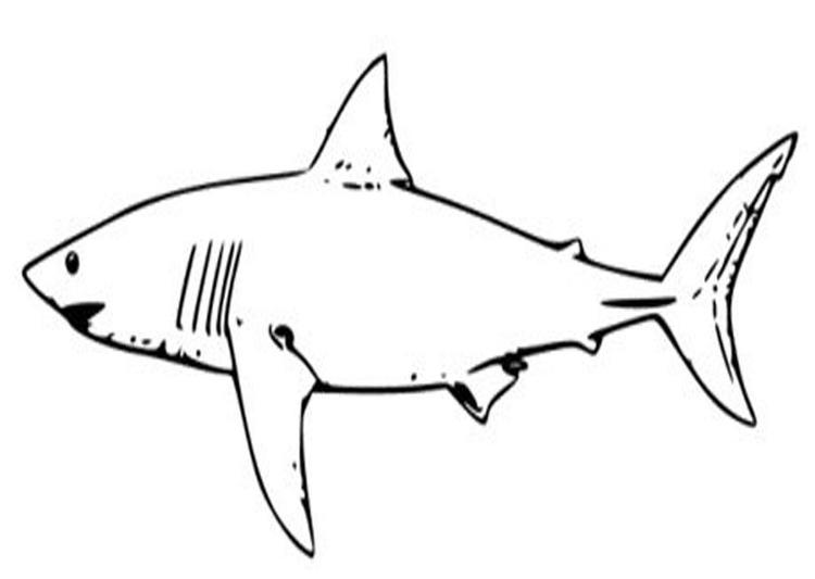 White Shark Coloring Pages