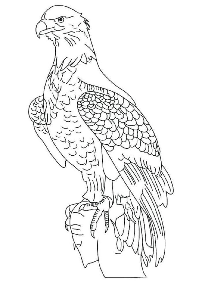 White Tailed Eagles Coloring Pages