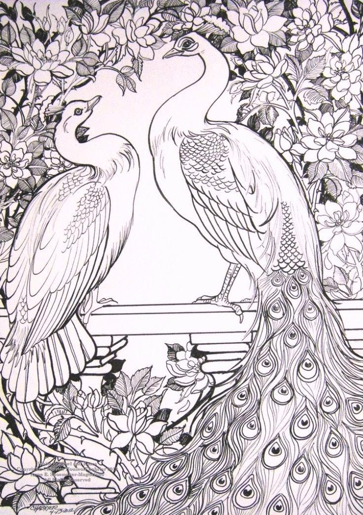 White Peafowl Coloring Pages
