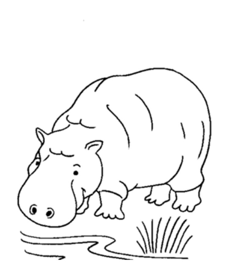 Wild African Animal Coloring Pages Hippo