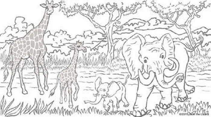 Wildlife Coloring Pages Free Printable
