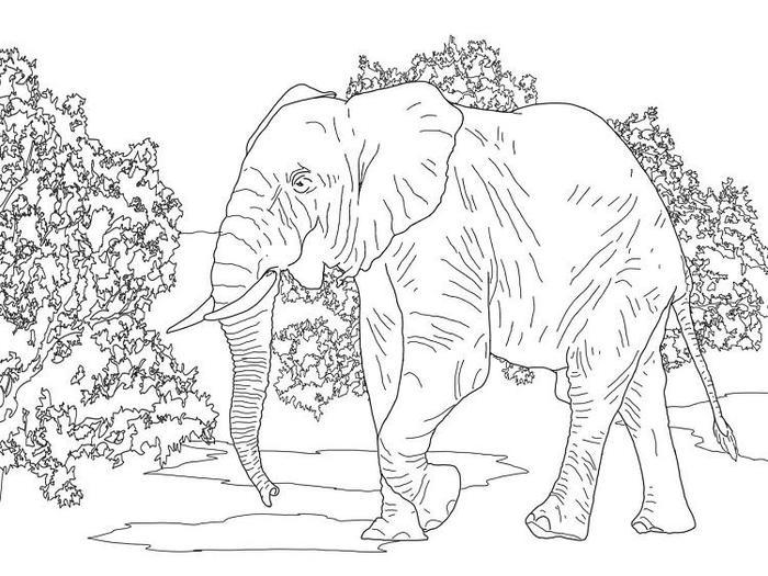 Wildlife Elephant Coloring Pages