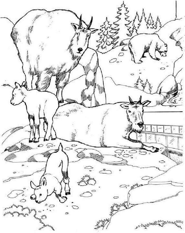Wildlife Scenery Coloring Pages