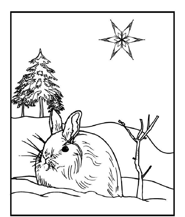 Winter Animals Coloring Pages Free
