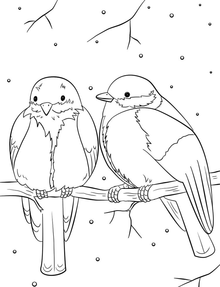 Winter Birds Coloring Pages