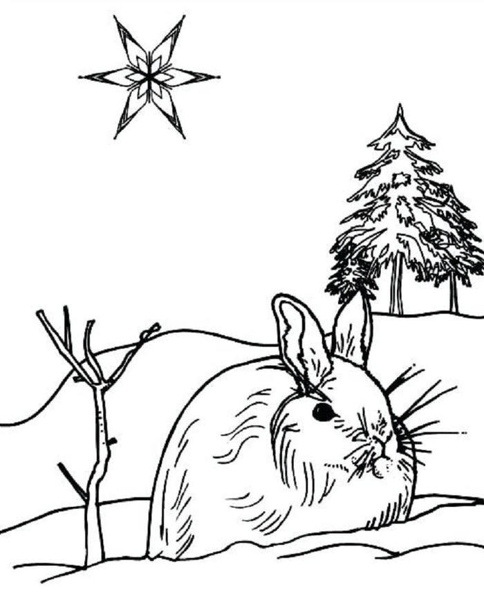 Winter Rabbit Coloring Pages