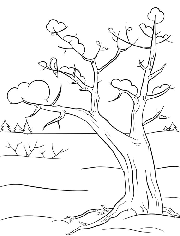 Winter Trees Coloring Pages