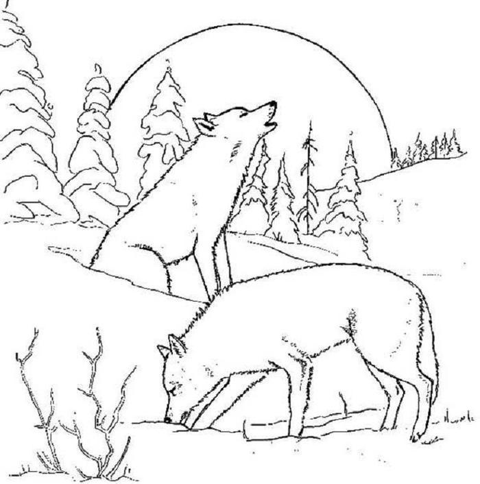 Winter Wolf Coloring Pages