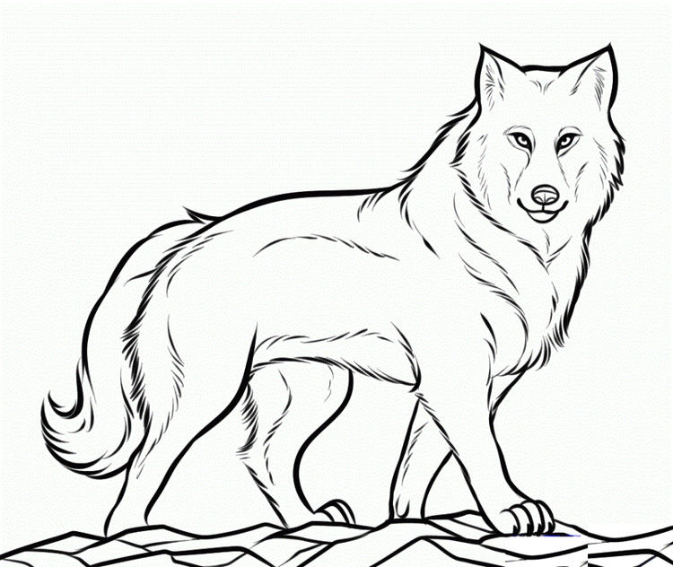 Wolf Coloring Pages Walking