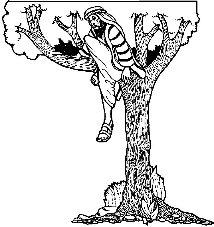 Zacchaeus Climbs Tree To See Jesus Coloring Page