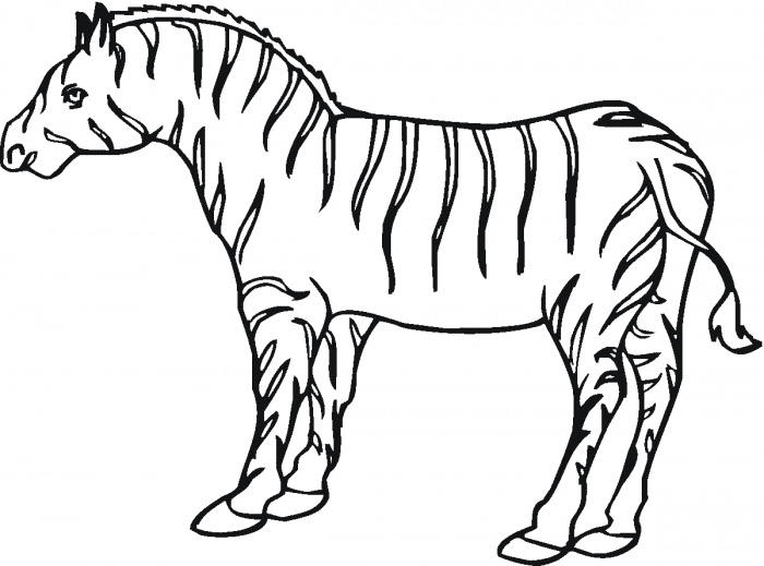 Zebra Coloring Pages Free To Print