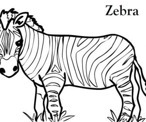 Zebra coloring pages printable