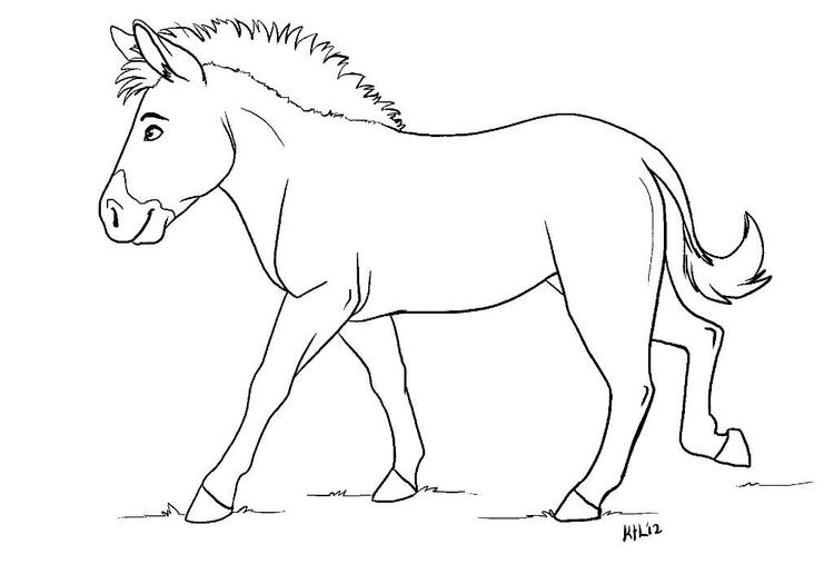 Zebra Coloring Pages Without Stripes