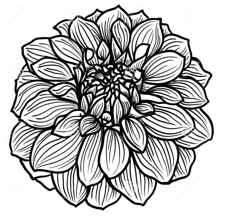 Zentangle Dahlia Flower Coloring Page