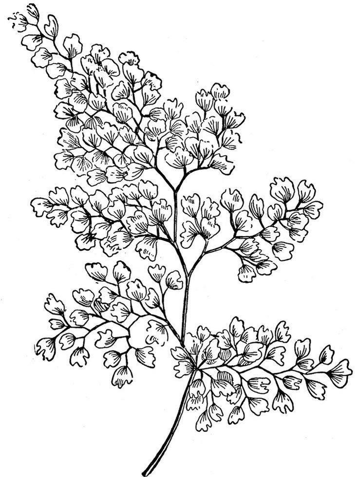 Zentangle Leaves Coloring Online