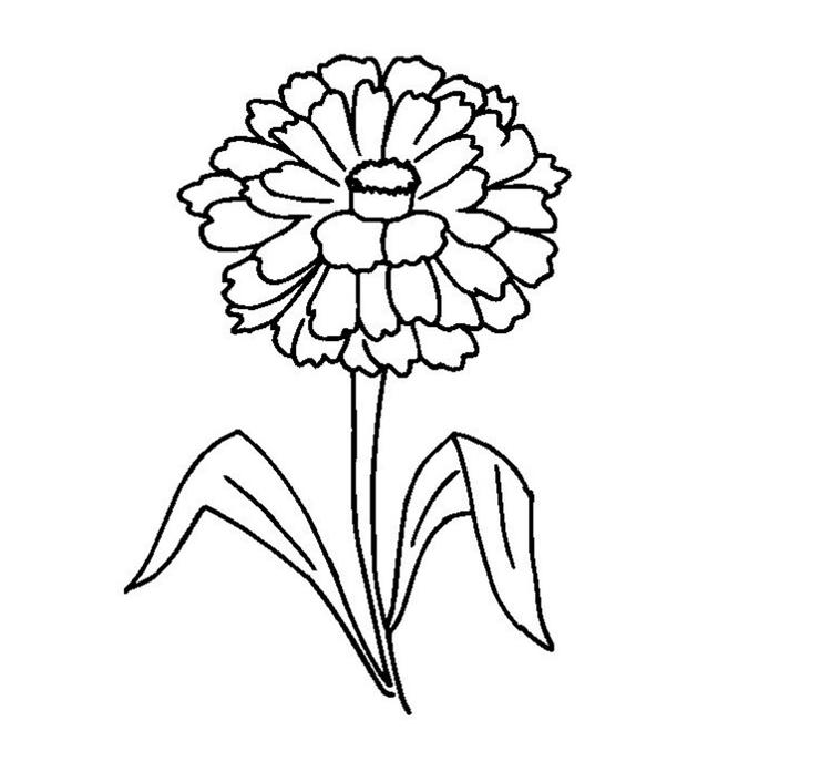 Zinnia Flower Coloring Page
