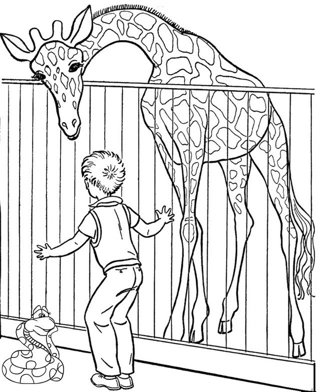Zoo Giraffe Coloring Page For Children